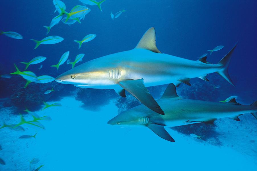 Aquarium-Guadeloupe004