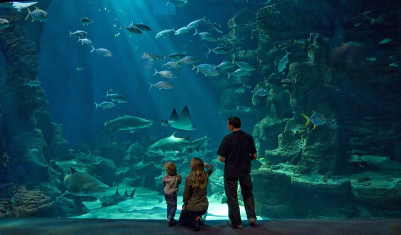 aquariums de uca asso aquarium mare nostrum aquariums de uca asso