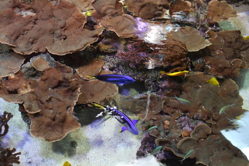 Aquariums (4) [800x600]