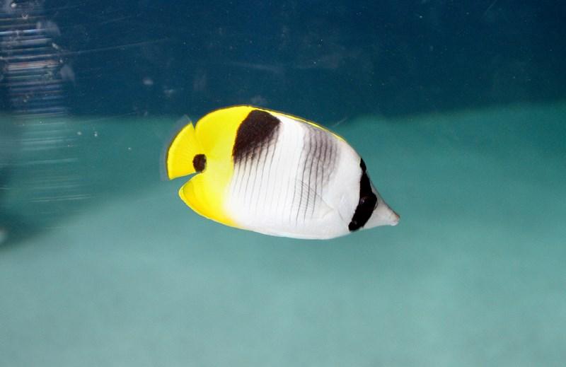 Aquariums (6) [800x600]