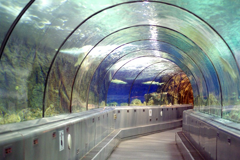Tunnel des requins (1) [800x600]
