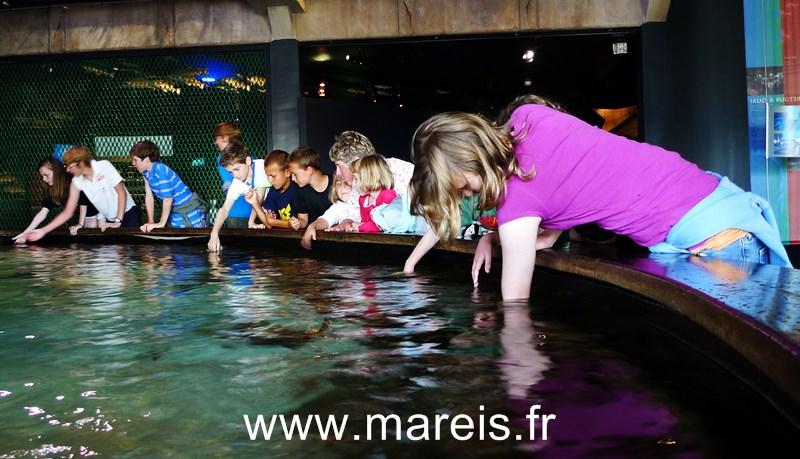 Le bassin tactile_Tactile aquarium [800x600]