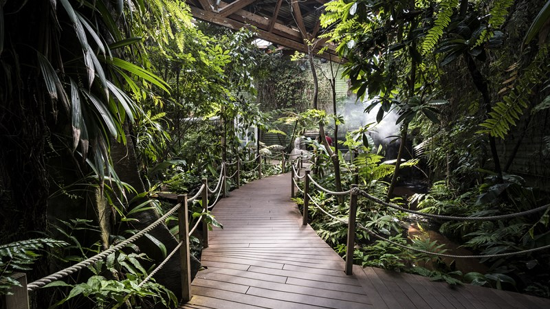 Serre-tropicale_pavillon-tropical-Oceanopolis_Credit-photo-Simon-Cohen (1) [800x600]