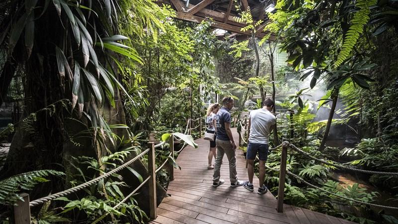 Serre-tropicale_pavillon-tropical-Oceanopolis_Credit-photo-Simon-Cohen (2) [800x600]