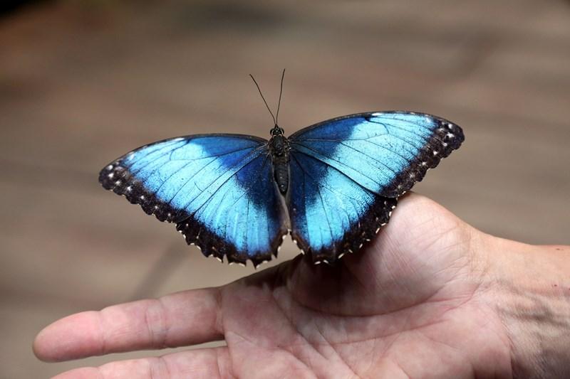 Un-ocean-de-papillons_Noel2018_Oceanopolis_Credit-photo-Oceanopolis_1 [800x600]