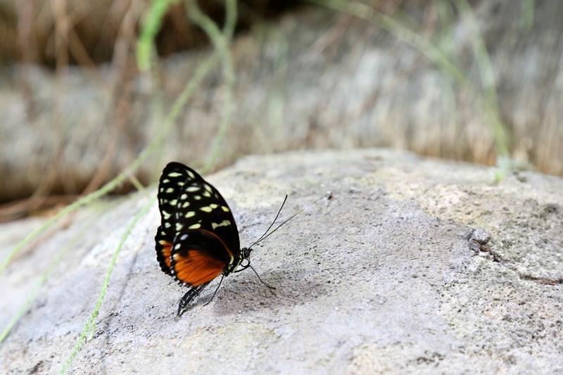 Un-ocean-de-papillons_Noel2018_Oceanopolis_Credit-photo-Oceanopolis_2 [800x600]