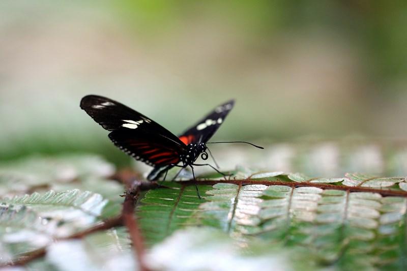 Un-ocean-de-papillons_Noel2018_Oceanopolis_Credit-photo-Oceanopolis_3 [800x600]