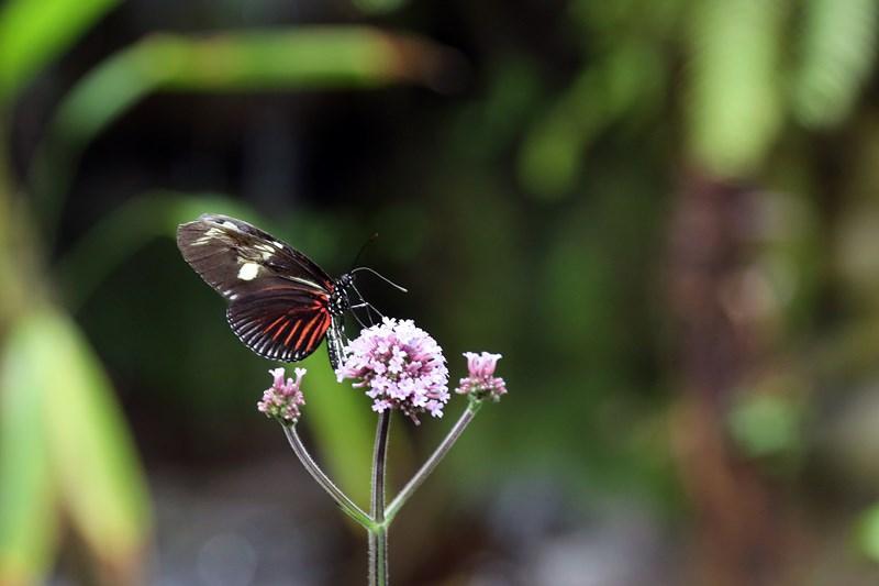 Un-ocean-de-papillons_Noel2018_Oceanopolis_Credit-photo-Oceanopolis_4 [800x600]