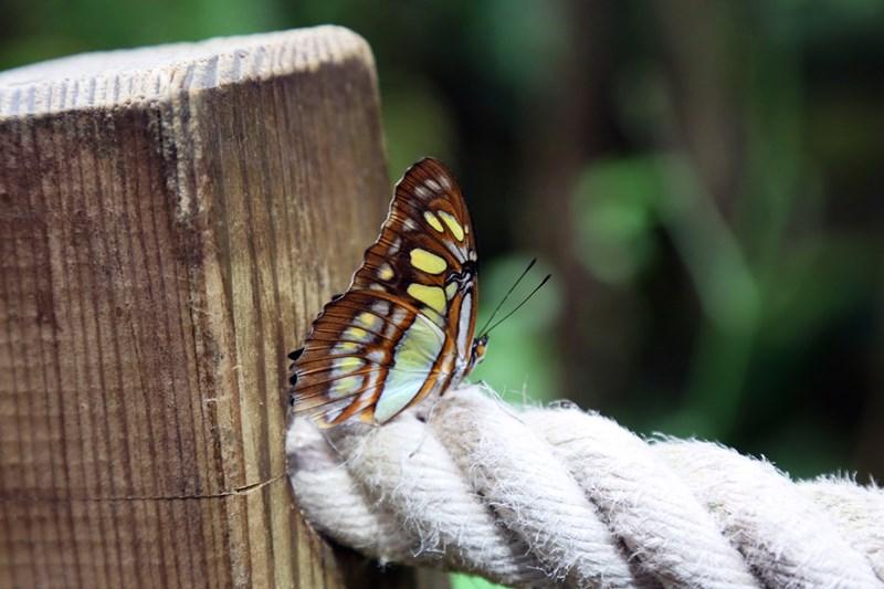 Un-ocean-de-papillons_Noel2018_Oceanopolis_Credit-photo-Oceanopolis_5 [800x600]
