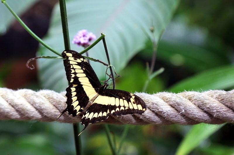 Un-ocean-de-papillons_Noel2018_Oceanopolis_Credit-photo-Oceanopolis_6 [800x600]