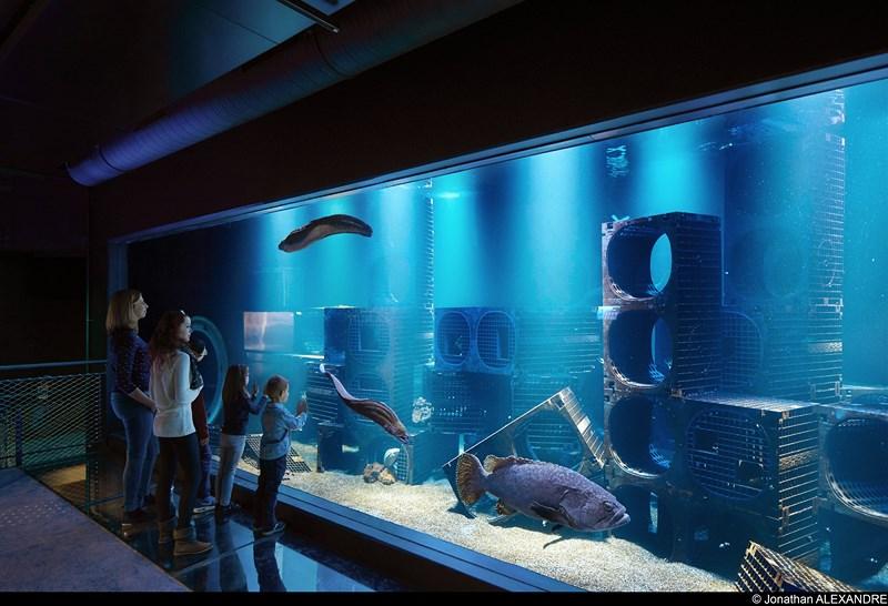 Aquarium merous-public-J-Alexandre-droits sauf affichage 4x3 [Diaporama nausicaa]