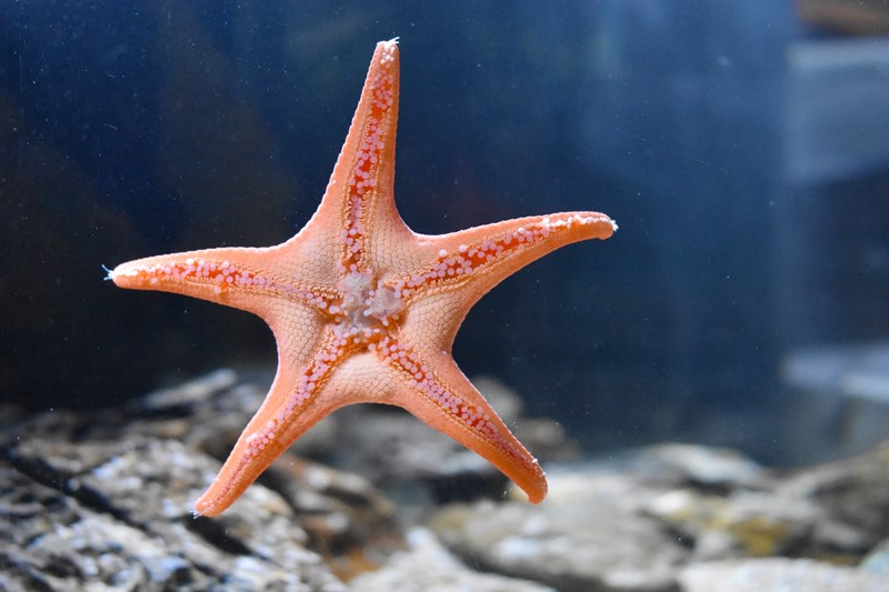L-Merlier - étoile [Diaporama nausicaa]