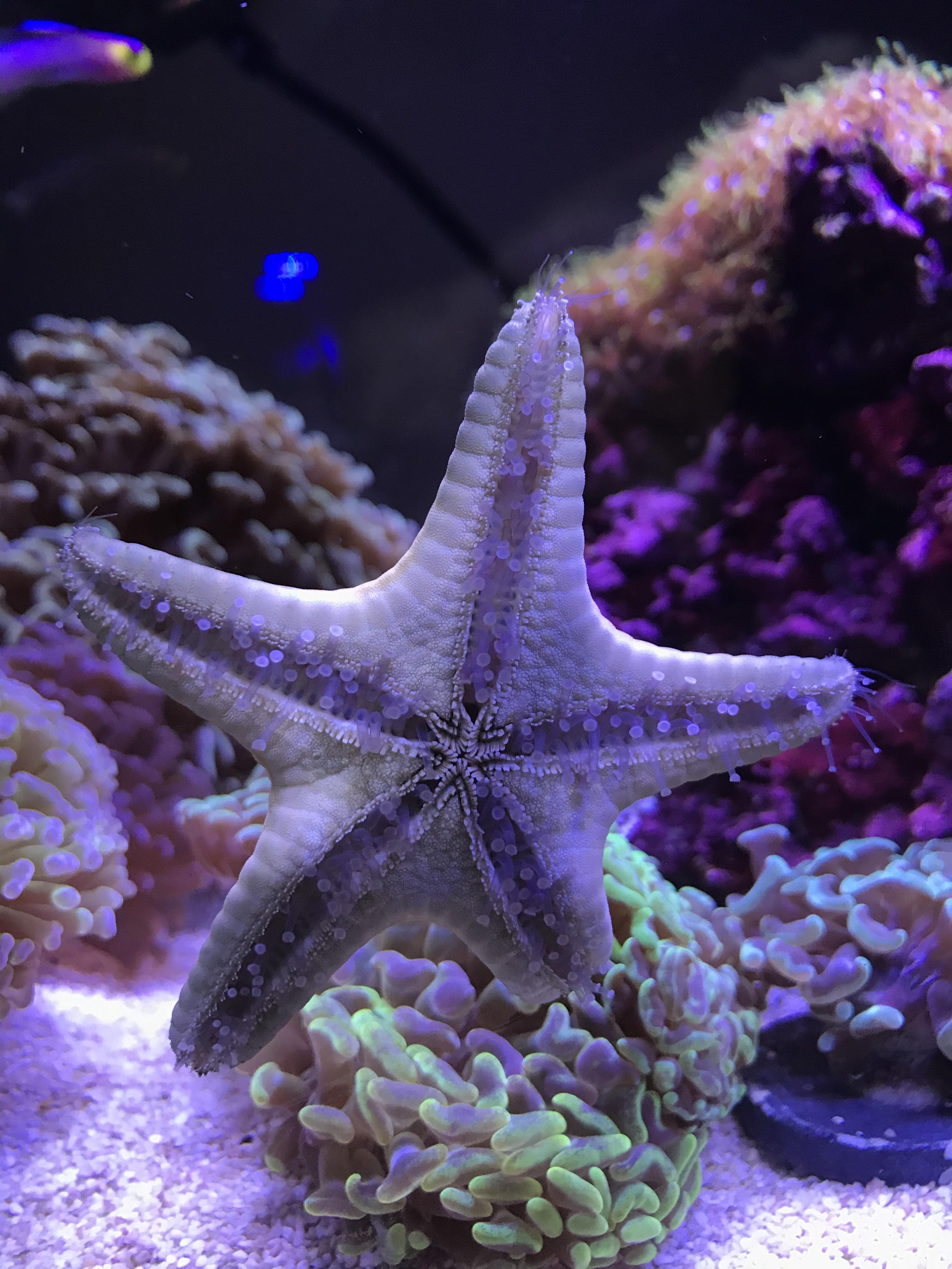 étoile avec corail