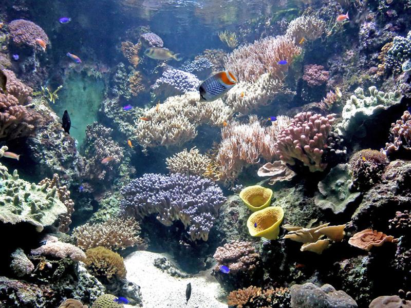 barriere-de-corail(c)aquarium-larochelle