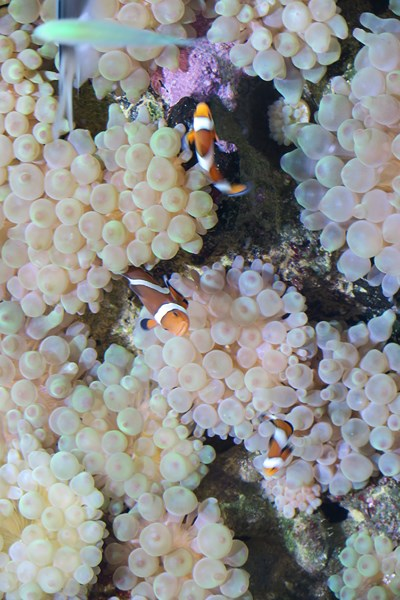 Aquariums (3) [800x600]