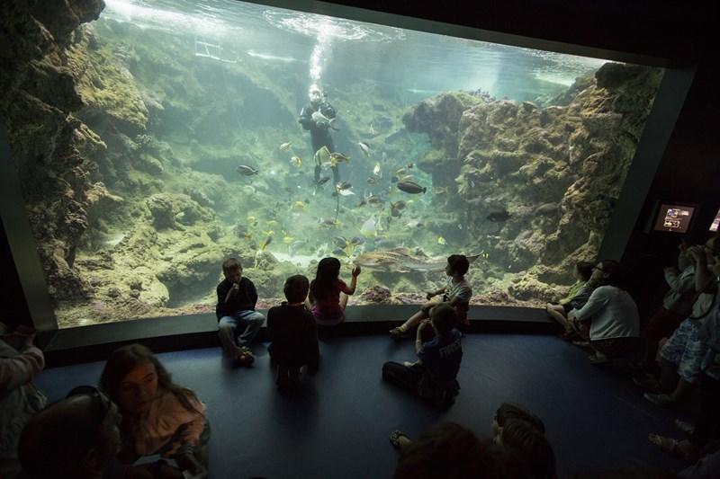 PavillonTropical_NourrissagePlongee_Copyright-Oceanopolis [800x600]