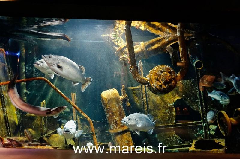 Aquarium _Epave_©G.Butruille 2 [800x600]